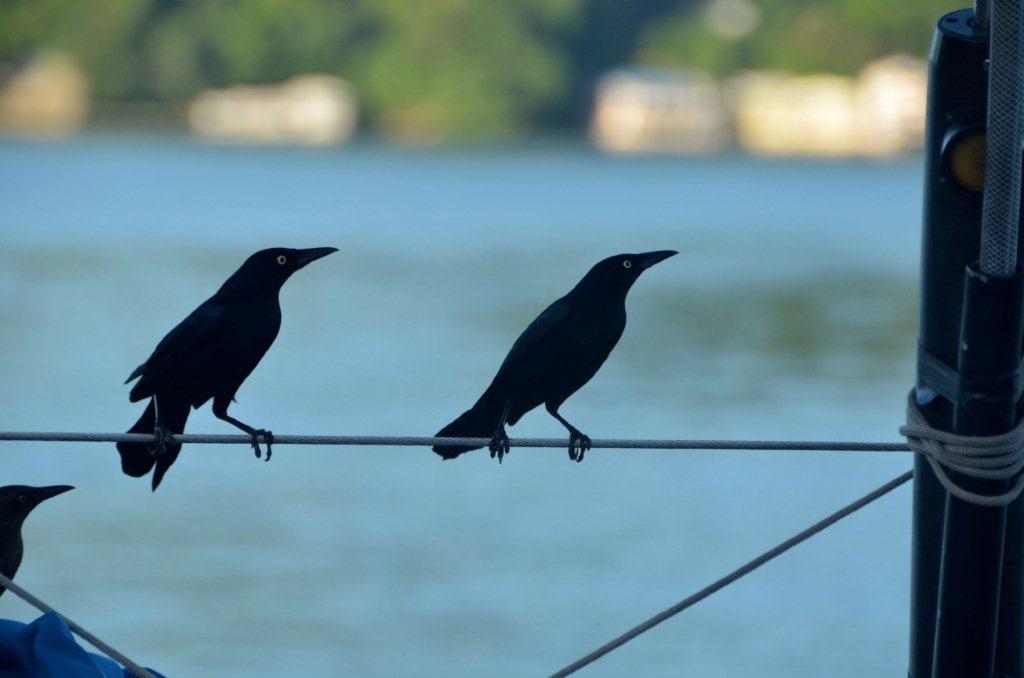 tierischer Empfang auf Trinidad