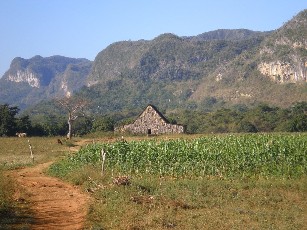 Tabakhaus im NP Pinar del Rio