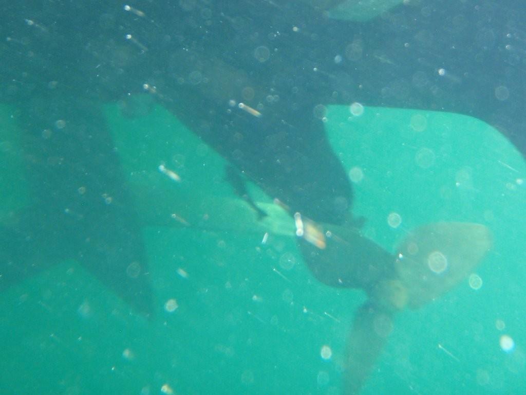 ein kleiner Sandhai unter uns