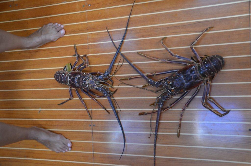 Lobster zum Sattessen