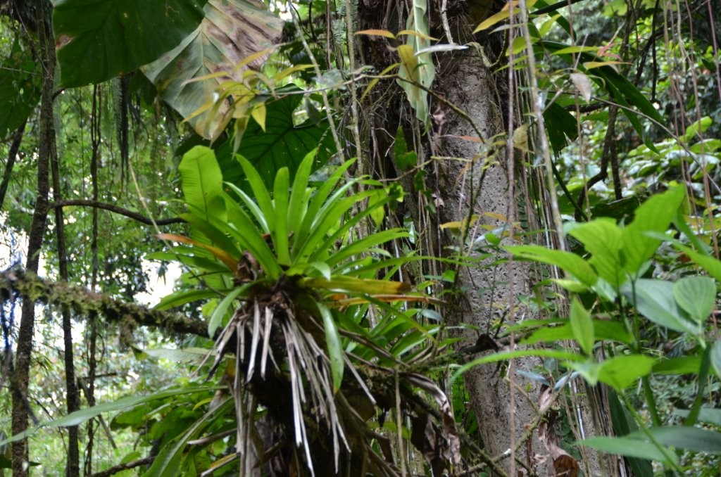 tropischer Regenwald auf Guadeloupe