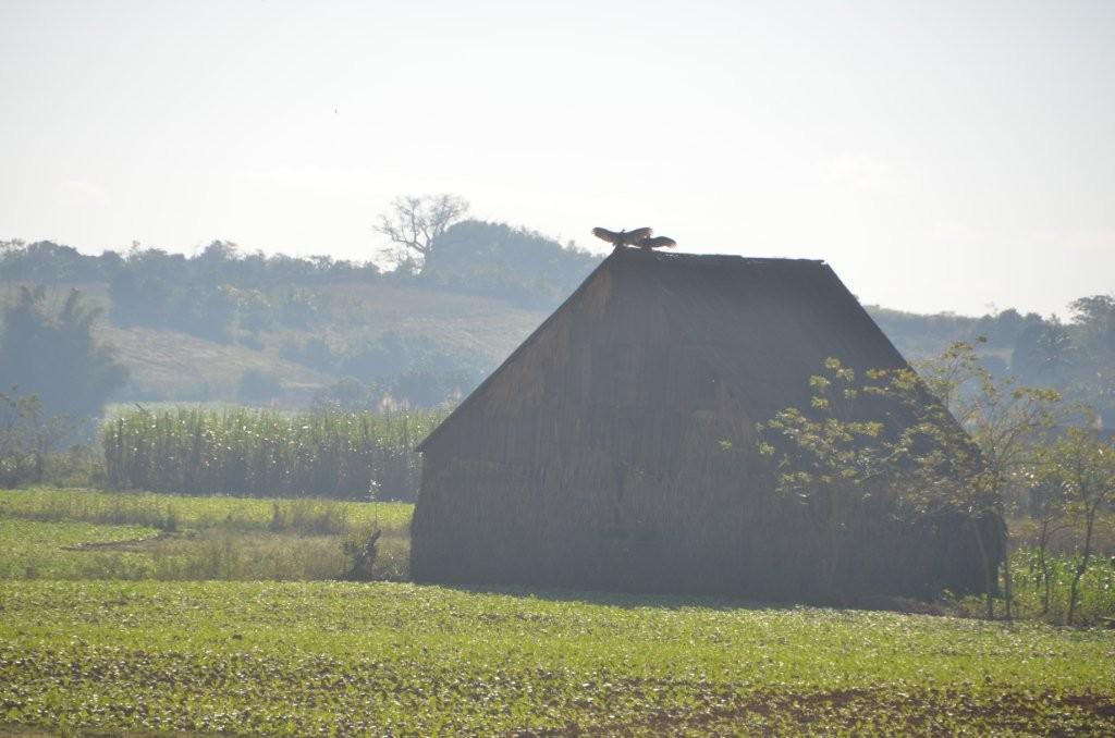 Tabakhaus im NP Pinar del Rio mit Geier