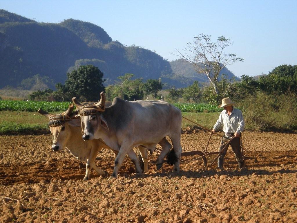 Farmer  im NP Pinar del Rio