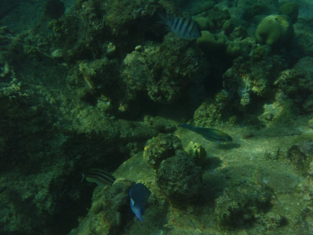 Pigoen Island / Gouadeloupe