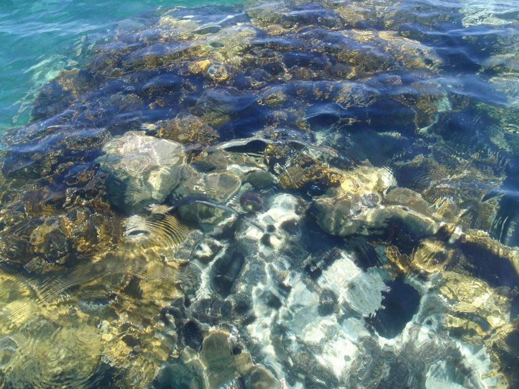 Corallengaerten