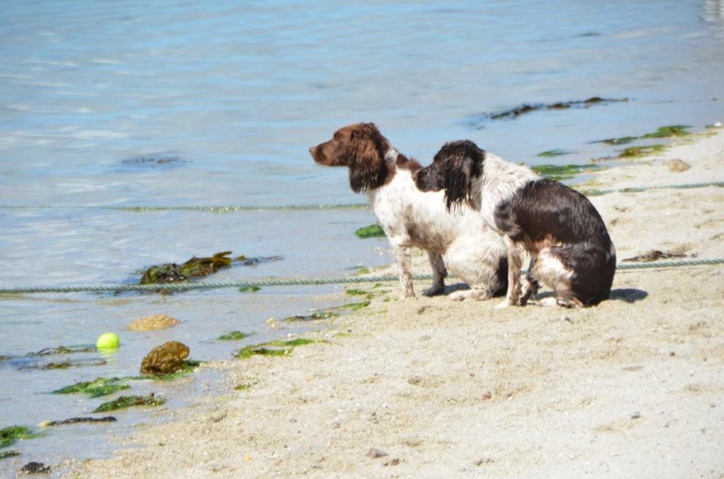 ... auch fuer die Hunde ist das Wasser einfach zu kalt