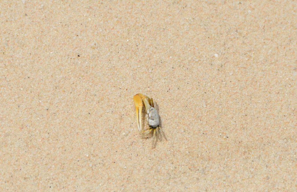 Sandbank Bewohner