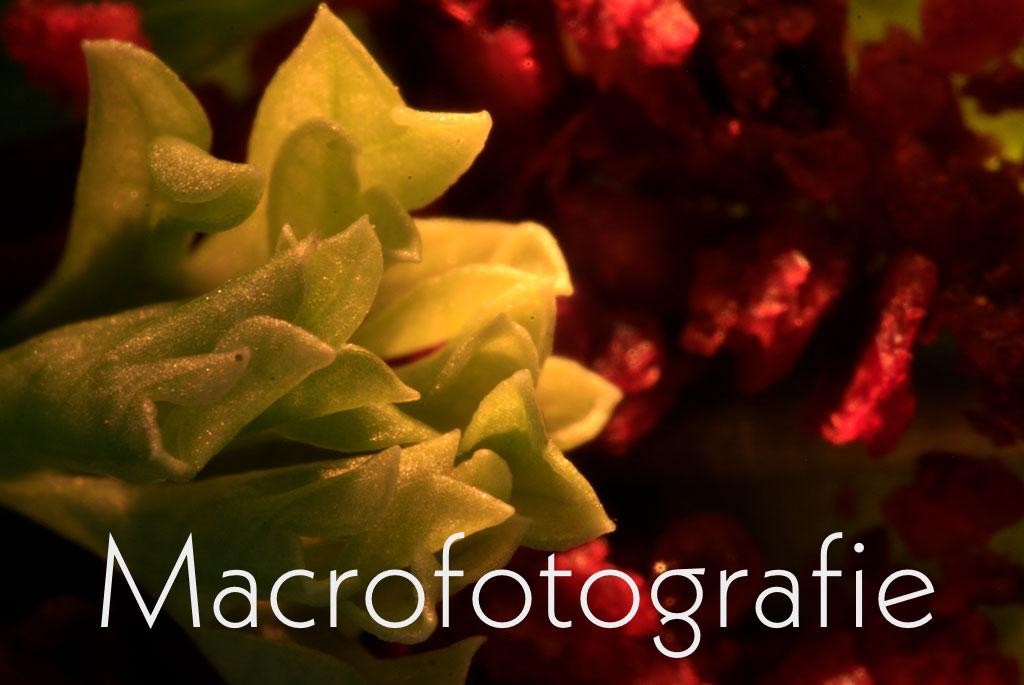 Bestellnummer: MF025  |  Makro – Petersilie © [:picart]by godot-plus, Eva Lenzenhuber