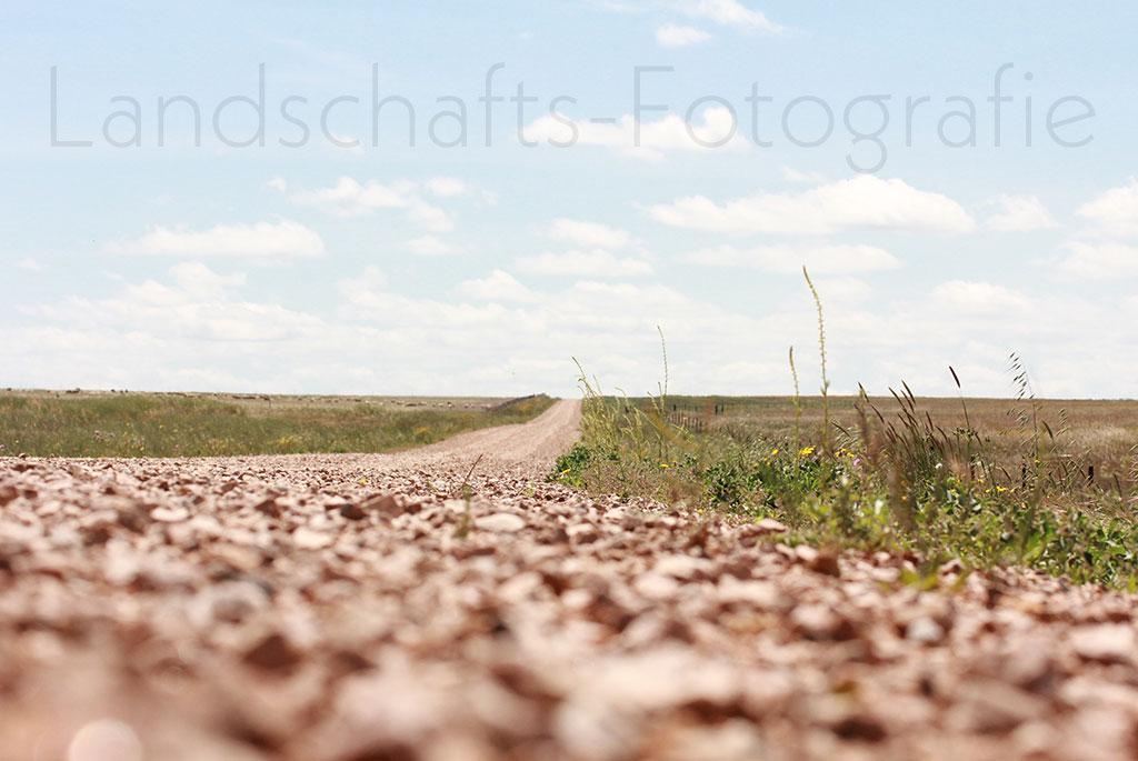 Bestellnummer: MF031  |  Landschaft – Spanien Coto Doñana Weg © [:picart]by godot-plus, Eva Lenzenhuber