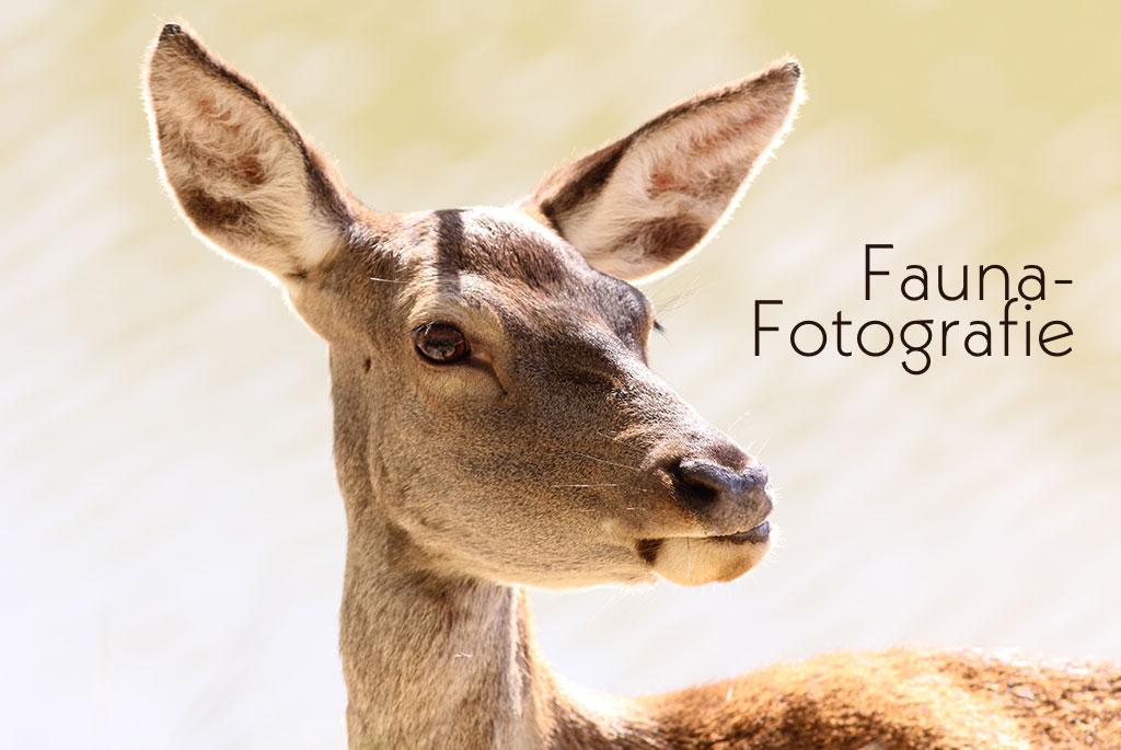 Bestellnummer: MF032  |  Fauna – Wild © [:picart]by godot-plus, Eva Lenzenhuber