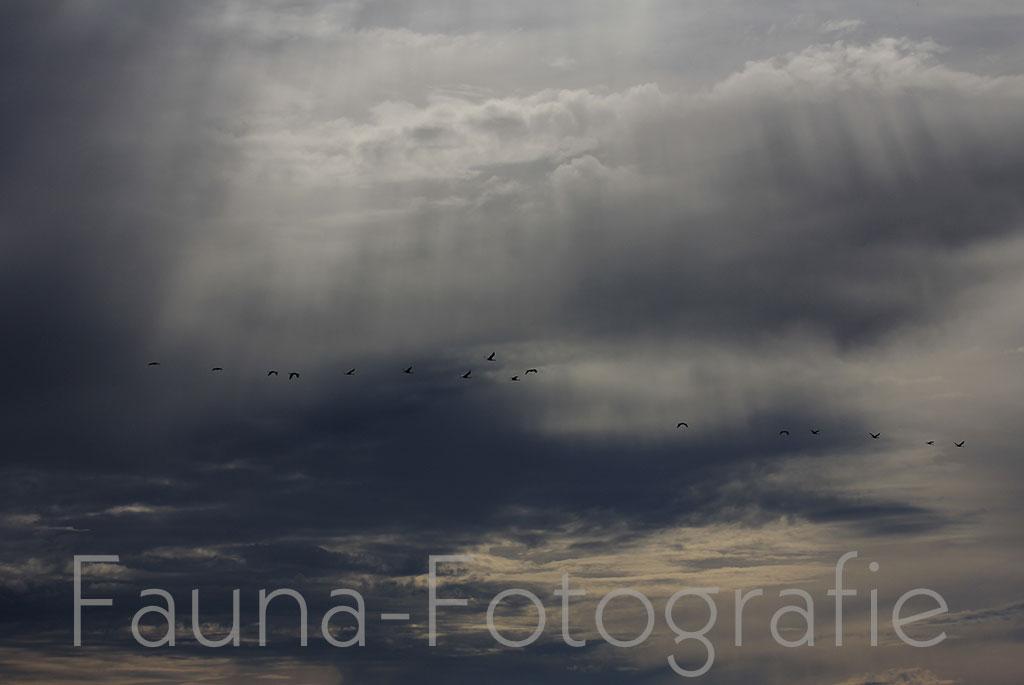 Bestellnummer: MF022  |  Landschaft – Kraniche über Spanien © [:picart]by godot-plus, Eva Lenzenhuber