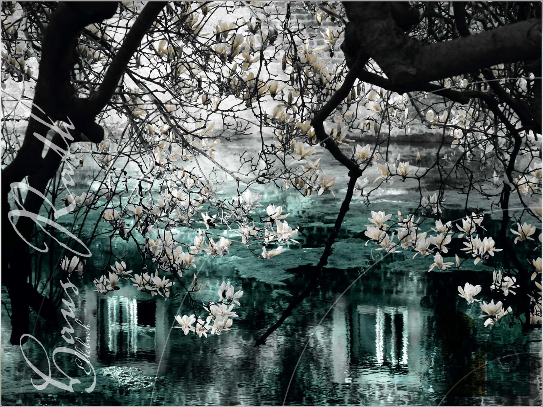 """""""Magnolientraum"""" © Eva Lenzenhuber"""