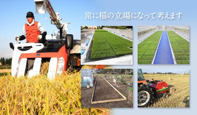 稲が今どんな気持ちか、暑いのか、寒いのか?どんなことをして欲しいか? 毎日田んぼへ行き、常に稲の立場になって考えます。稲を観察し、話しかけます。 ベストな状態・条件で植えて、ベストなタイミングで収穫したいと思っています。