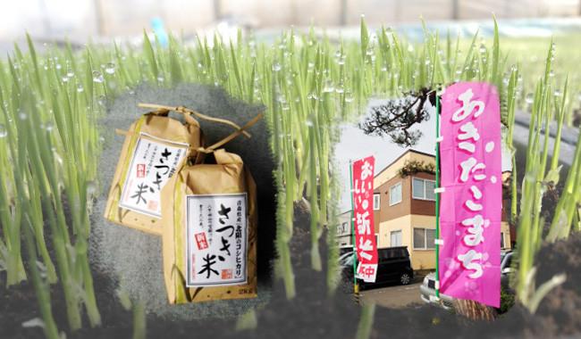 ウチのこめは 全て減農薬特別栽培米 コシヒカリには化学肥料は全く使わず、籾殻堆肥、米ぬか堆肥です。 あきたこまちには化学肥料は田植えのときに一回のみ しかもほんのわずかの量です。 除草剤は1~2回しか使っていません。