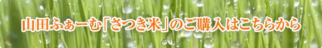 山田ふぁーむ「さつき米」のご購入はこちらから