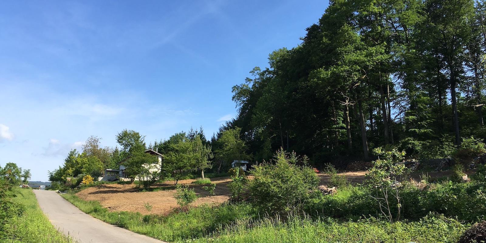 Ausblick Richtung Wald / Bammertsberg