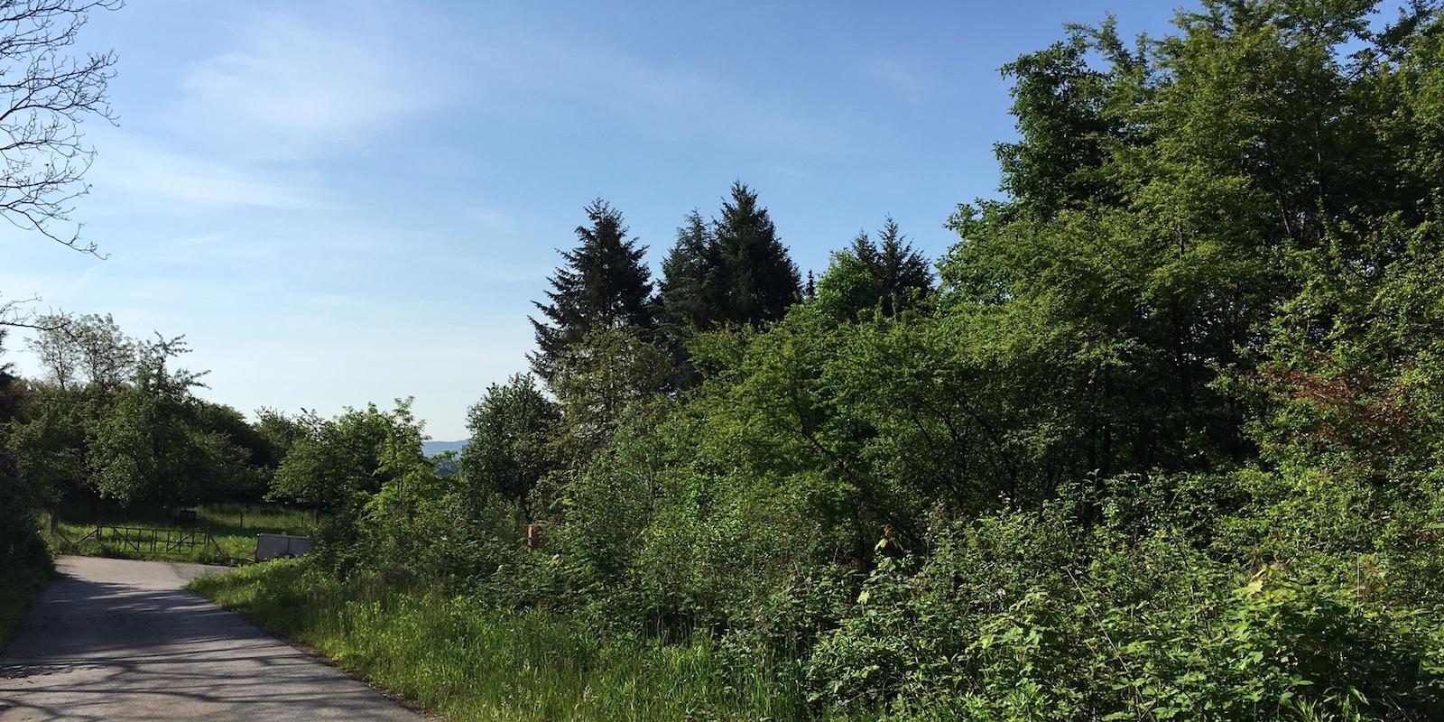 Blick zum Grundstück (rechts)