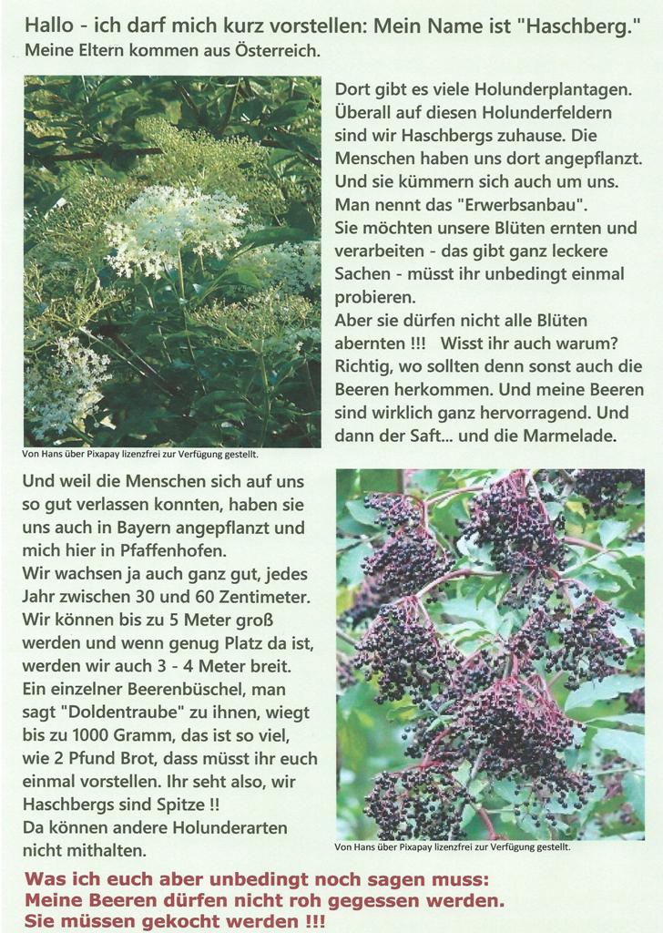 """Ein """"Haschberg"""" erzählt."""