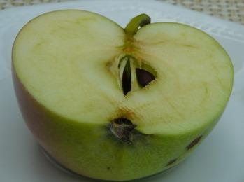 Apfel im Längsschnitt