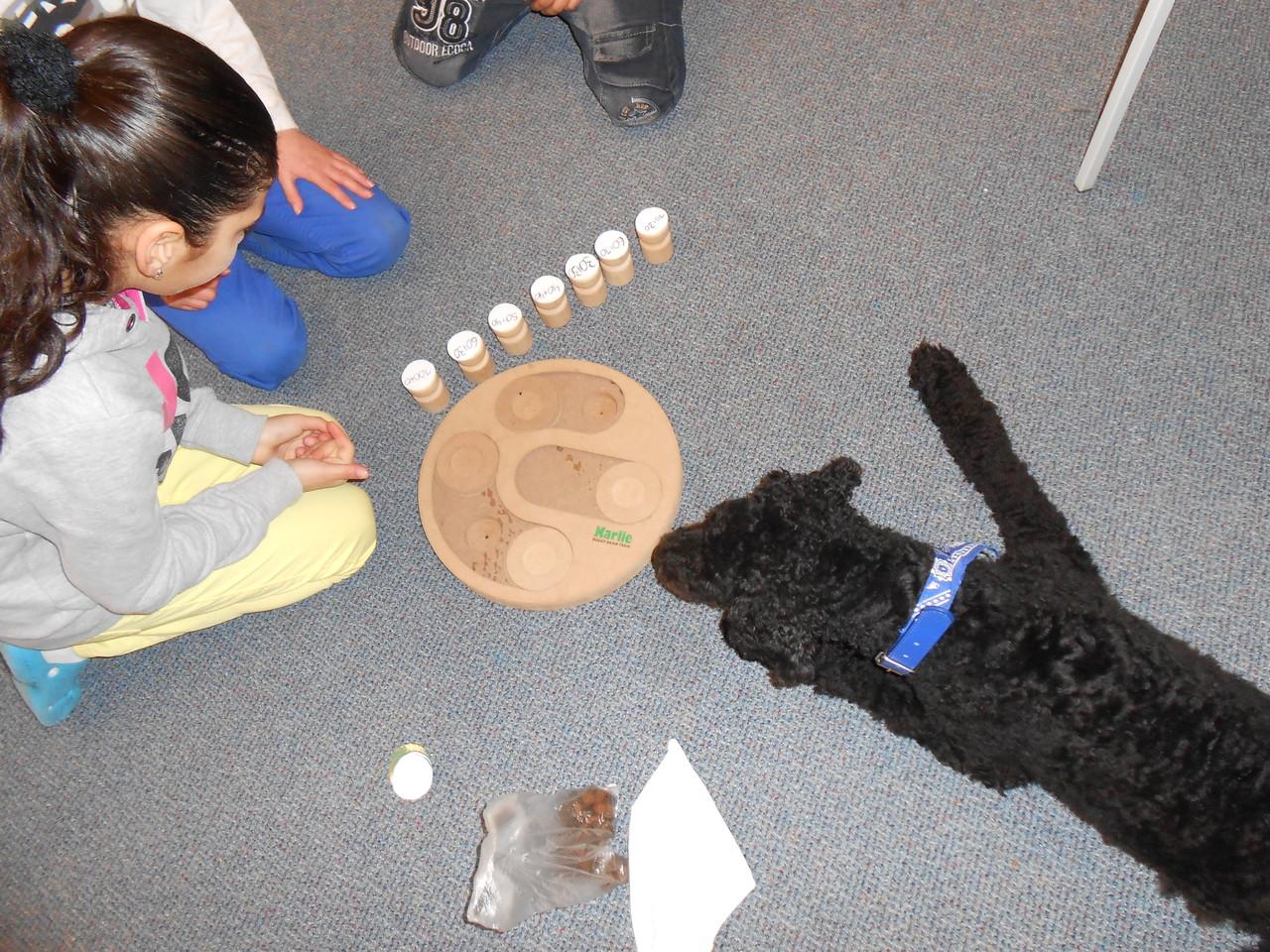 Schulhund Enno bei der Arbeit 3