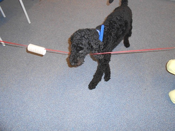 Schulhund Enno bei der Arbeit 1