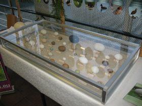 Ausstellungsvitrine aus 4 mm Plexiglas im Sonderprofil. Gezeigt wurden hier seltene ausgeblasene Eier von verschiedenen Vögeln.