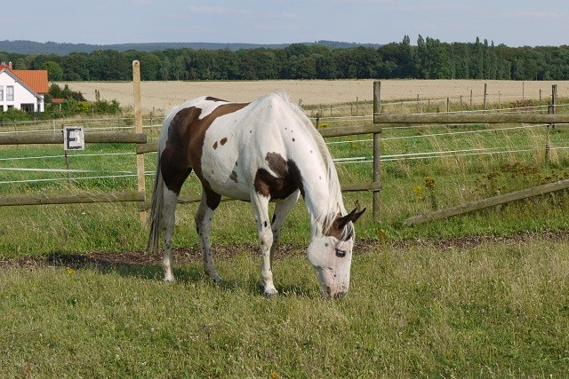 unsere pferde outrider ranch cremlingen braunschweig kindergeburtstag reiten. Black Bedroom Furniture Sets. Home Design Ideas
