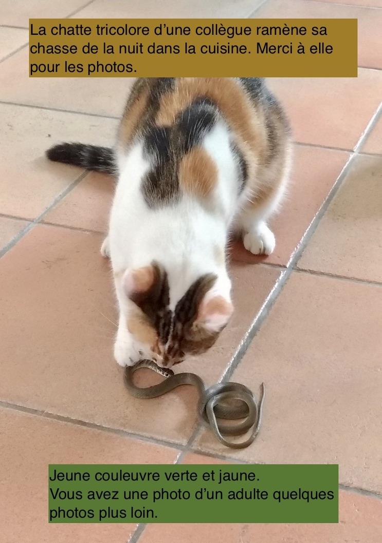La chatte s'amuse!!