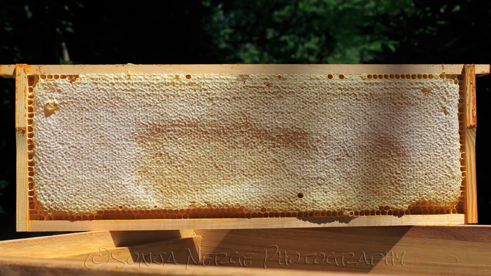 Die Honigernte