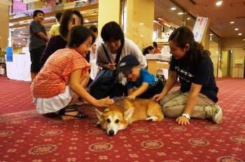 ドッグセラピー(いってみぃひん サマーカーニバル in 奈良ロイヤルホテル)