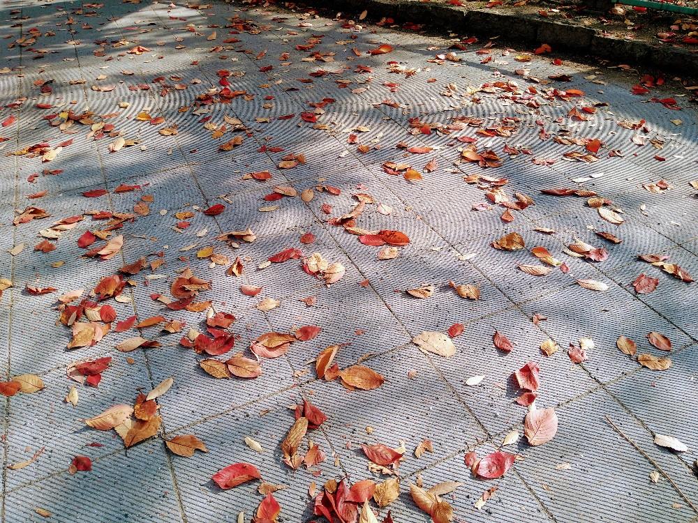 大分市 みつか漢方養生堂 乾燥した落ち葉