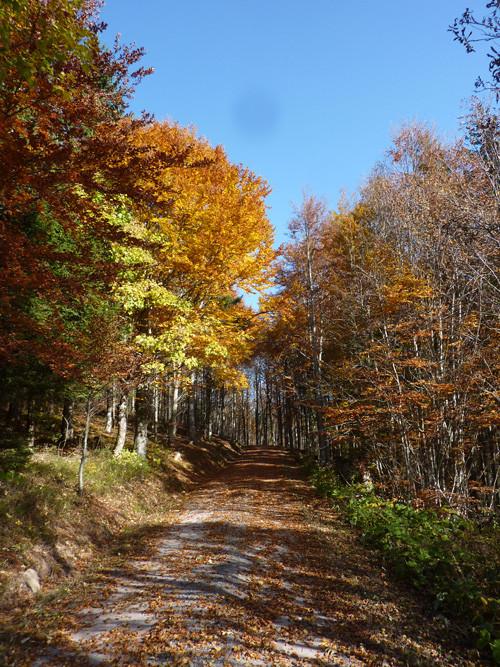 Wanderweg in Herbststimmung