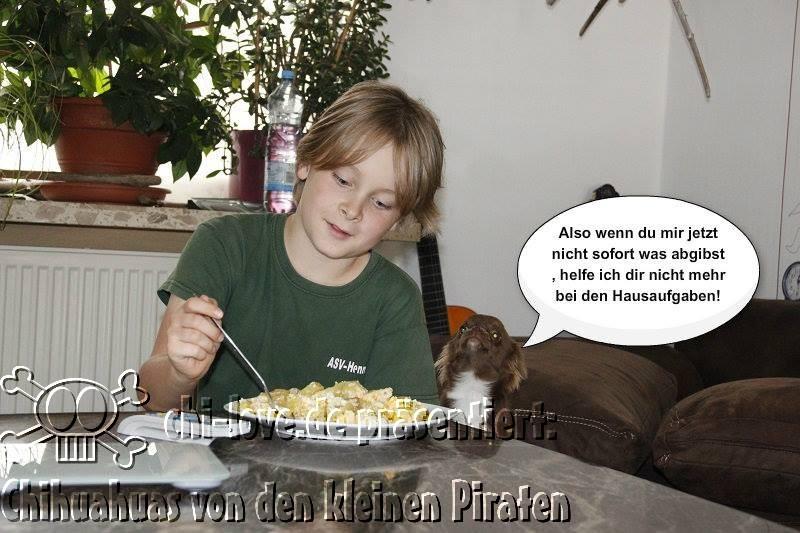 """Piraten-Cartoon auf Chi-Love.de präsentiert: Chihuahuas von den kleinen Piraten """"Hausaufgaben"""""""