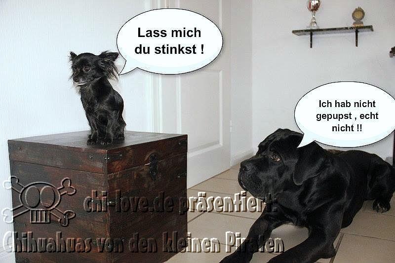 """Piraten-Cartoon auf Chi-Love.de präsentiert: Chihuahuas von den kleinen Piraten """"Lass mich, Du stinkst!"""""""