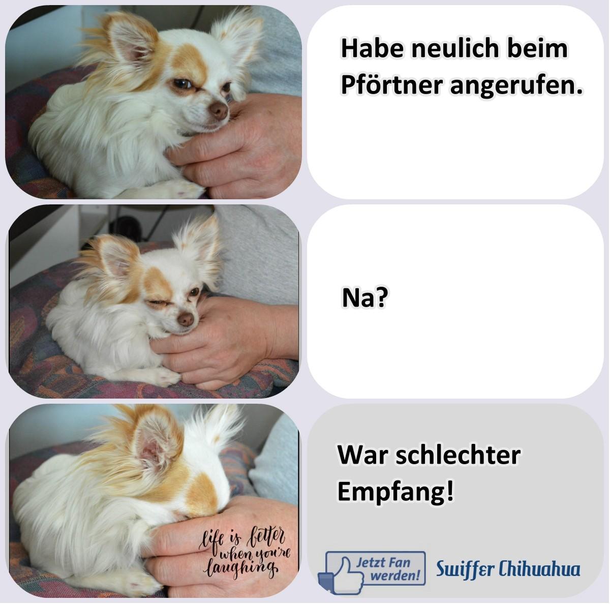 Chi-Love.de  | Flachwitze | BLOG | Magazin | Swiffer Chihuahua