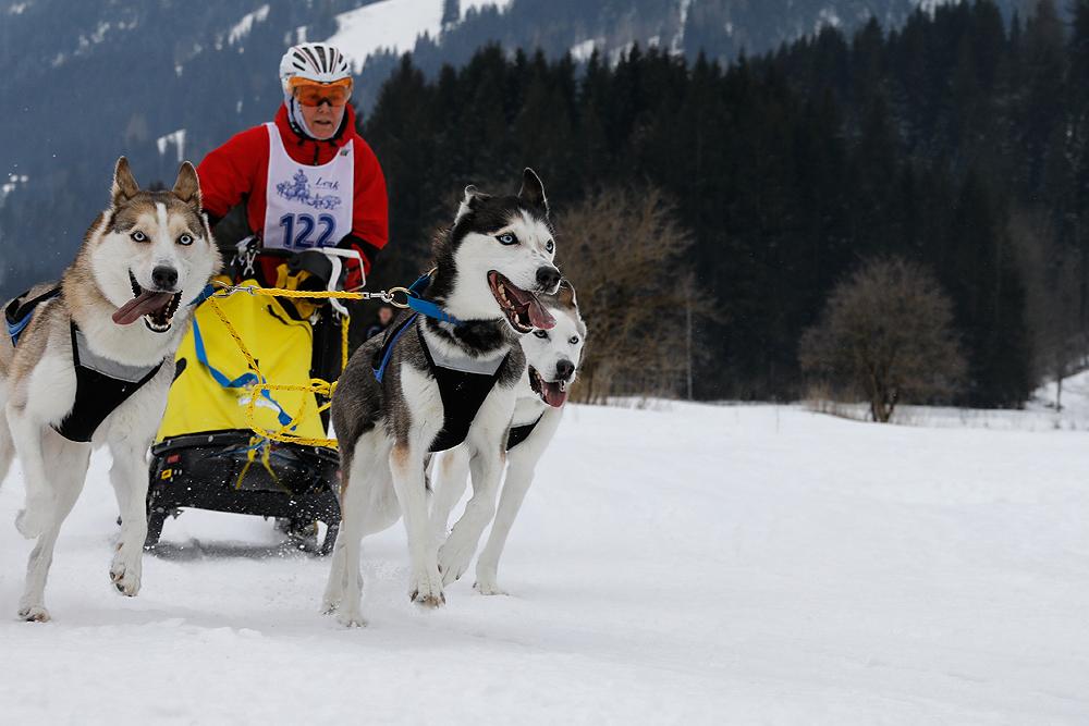 Hundeschlittenrennen - Lenk