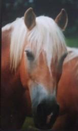Mirot 2002
