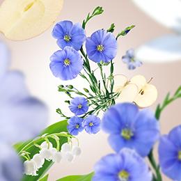 Linen Blossom