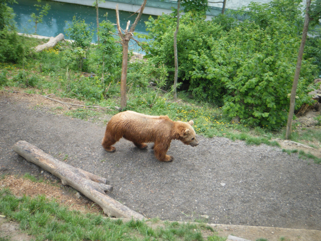 Fosse aux ours