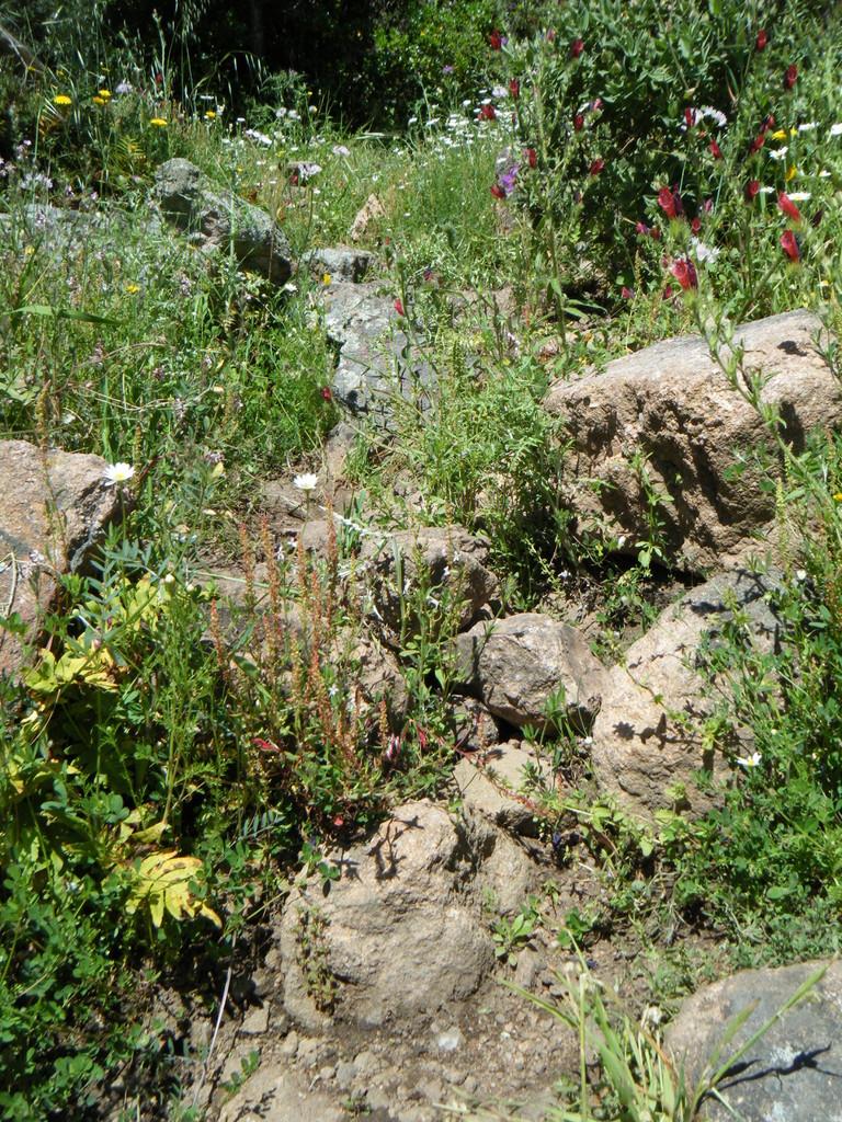 Roquebrune-sur-Argens, sur la montagne