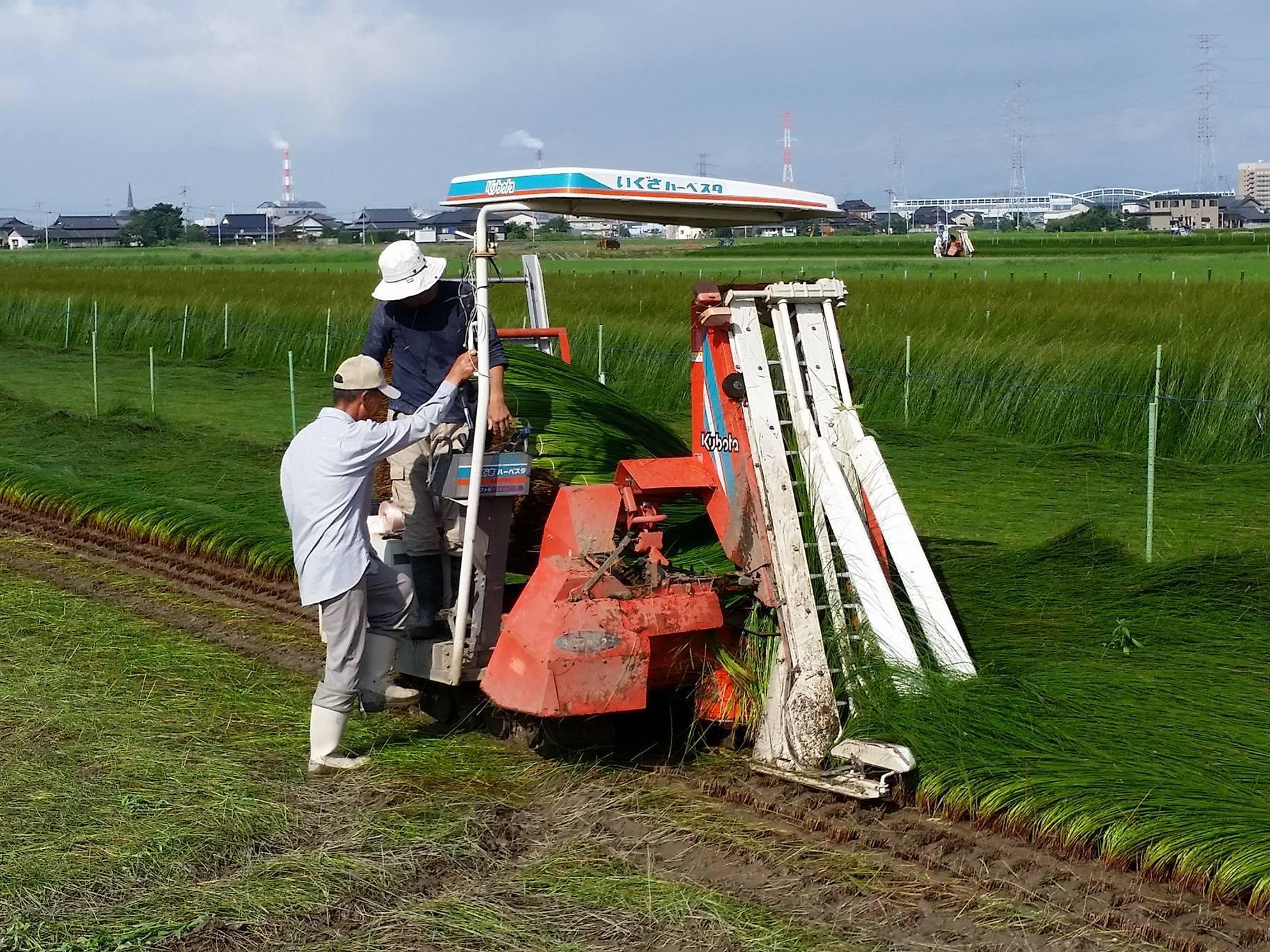 刈り取り機は真っ直ぐ進めるのに気を使います