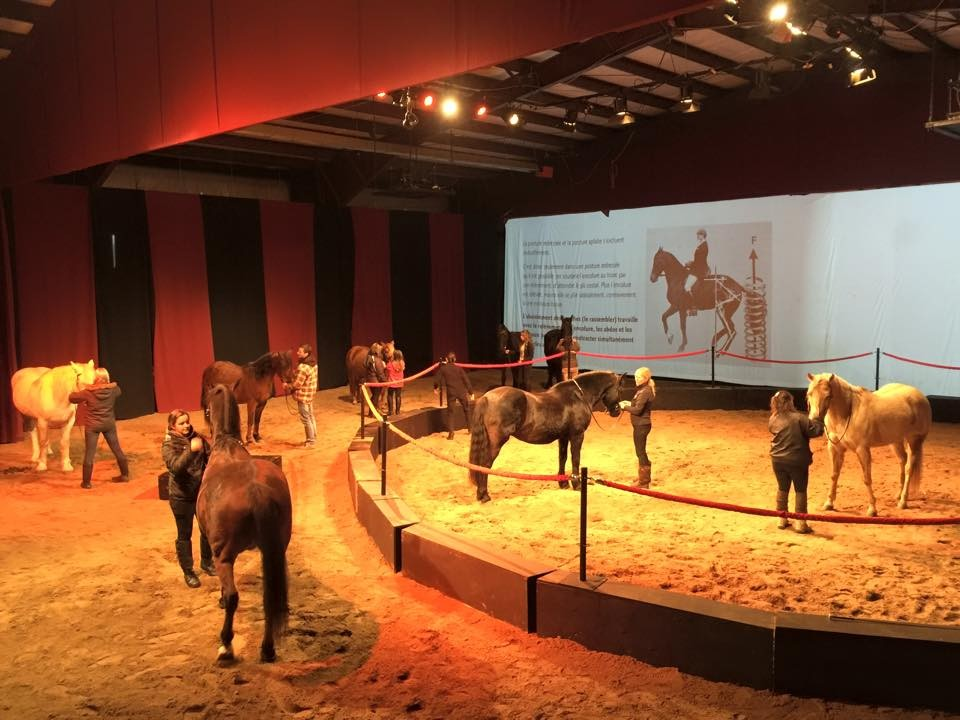 Formation chevaux-artistes