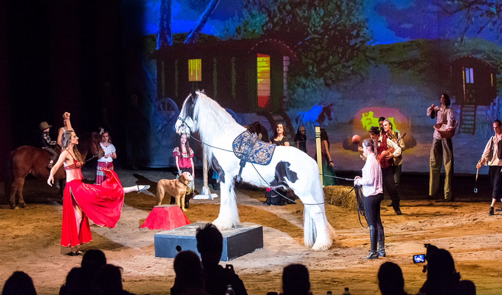 Spectacle Cheval artiste
