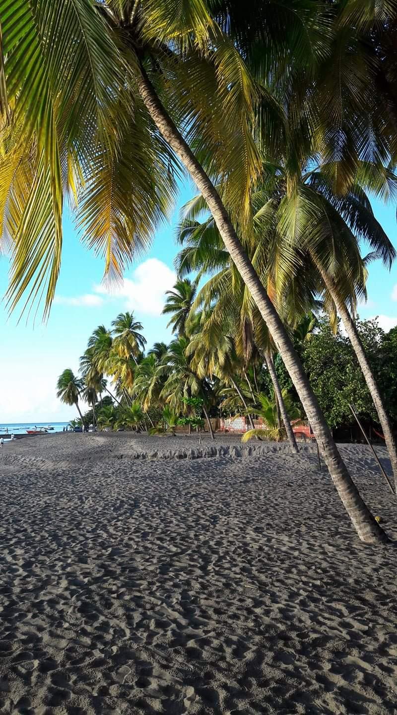Unser Traum auf Martinique..Sommer, Palmen, Meer