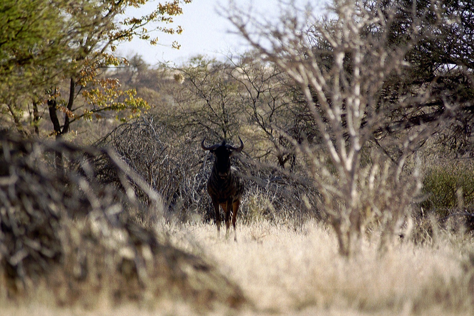Namibia 1999 Auslands-Job / Tierfang für Nationalpark SA