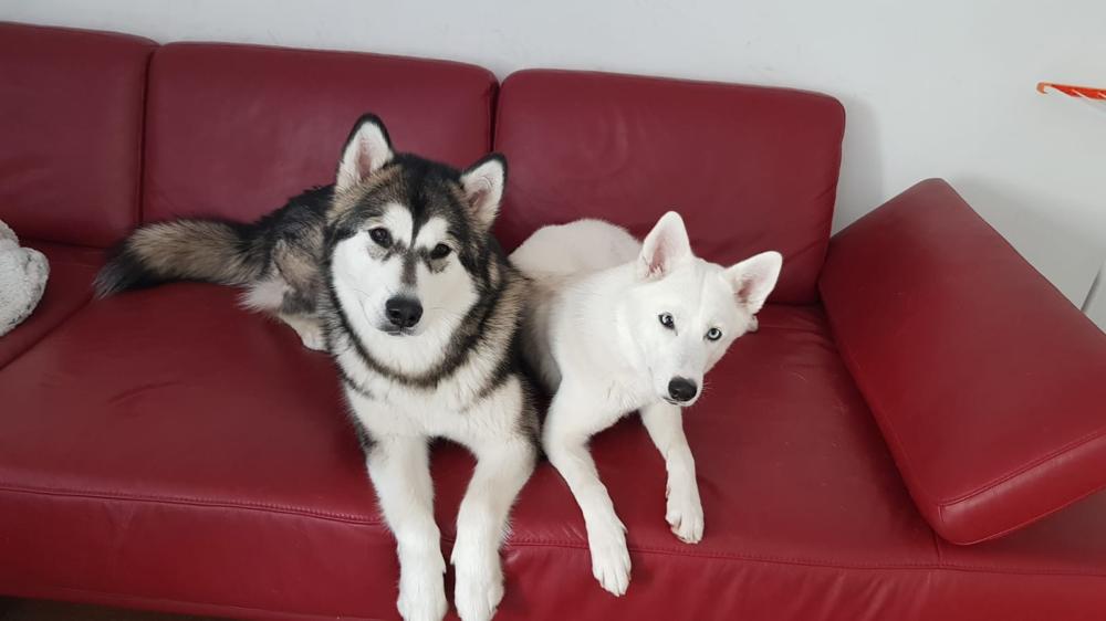 Takani mit ihrer neuen Freundin Ghost im neuen Zuhause