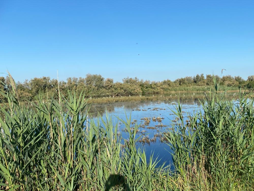 Sumpflandschaft...