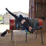 poney club de cenves séjour équestre 7