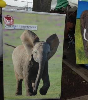 山形豪氏による実寸大の小象の写真がとても目を引く目印の「アフリカ象の涙」のブース♪