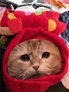 猫ちゃんのお飾り2つありました(=^・^=)(=^・^=)鯉のお飾り!めでたいニャ^^(新品でした💛)